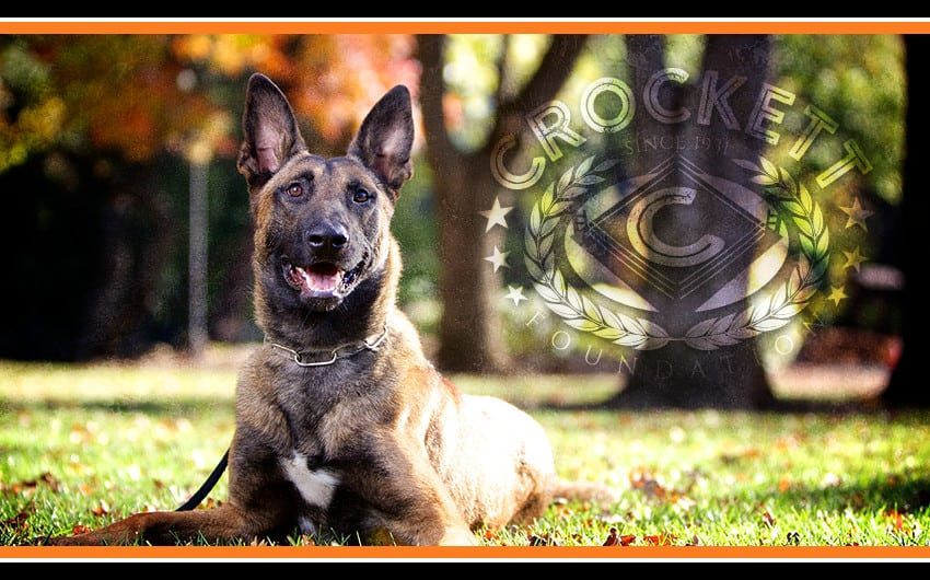 servicedogs-2
