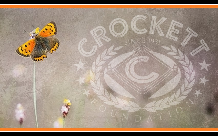 Crockett Foundation Flutterby