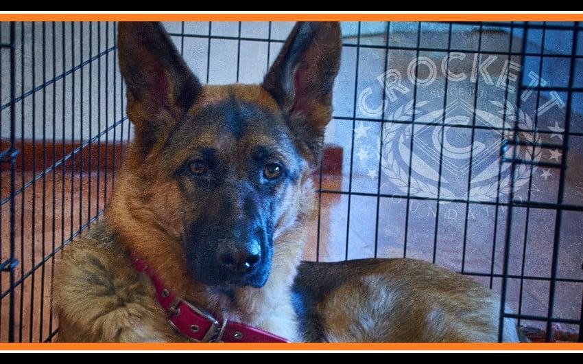 Crockett Foundation Service Dog Training